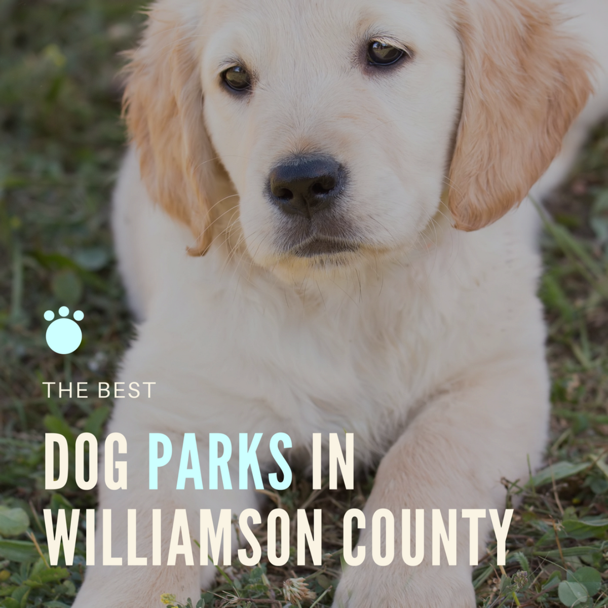 The Best Dog Parks in Williamson County